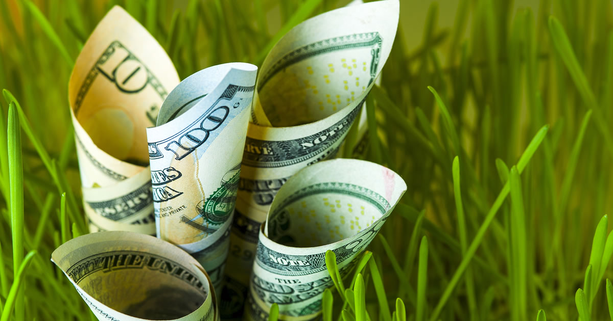 Dollar bills growing in green grass