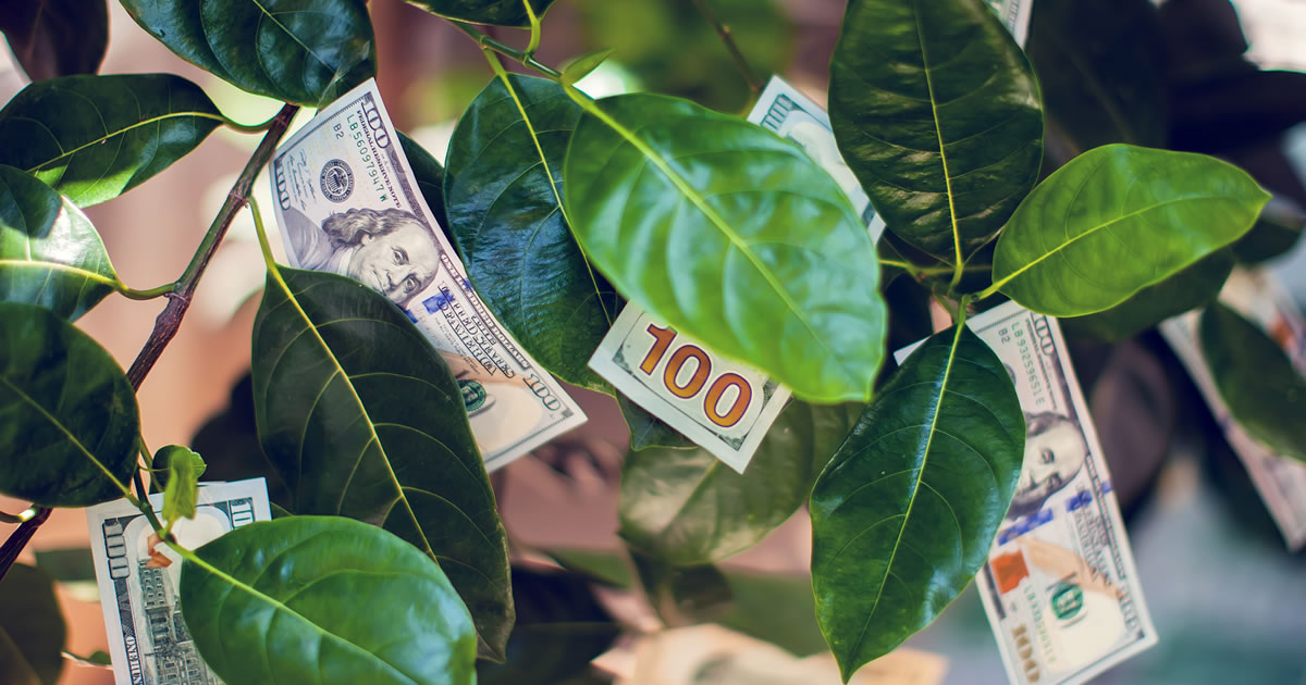 Money tree with dollar bills growing on leaves