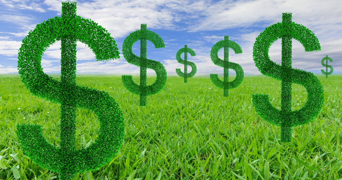 """Growing bush"" dollar signs in a field with a blue sky background"